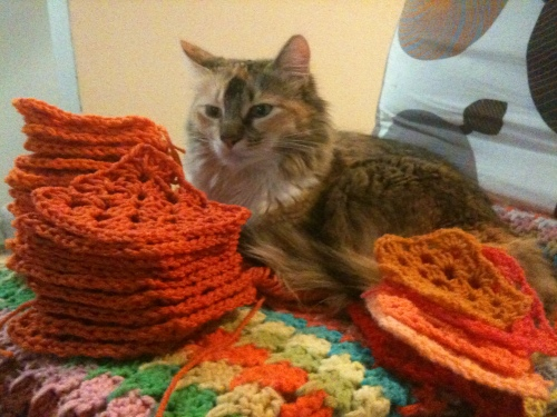 granny square kitten